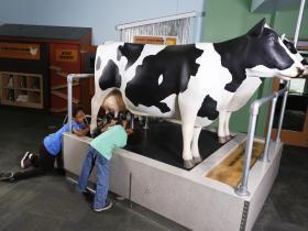 Ag zibit cows